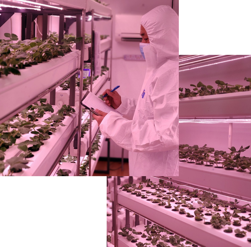 Lingjack Digital Smart Farming